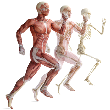 osteopatia pubalgia corsa